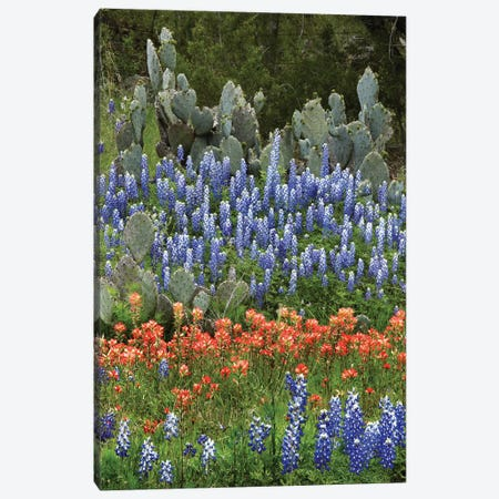 Bluebonnet, Paintbrush Cactus, Texas And Pricky Pear - Vertical Canvas Print #TFI117} by Tim Fitzharris Art Print