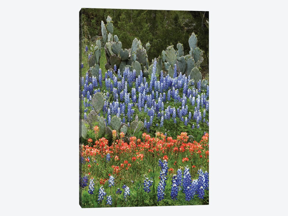 Bluebonnet, Paintbrush Cactus, Texas And Pricky Pear - Vertical by Tim Fitzharris 1-piece Canvas Art Print