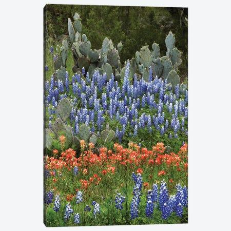 Bluebonnet, Paintbrush Cactus, Texas And Pricky Pear - Vertical Canvas Print #TFI117} by Tim Fitzharris Art Print