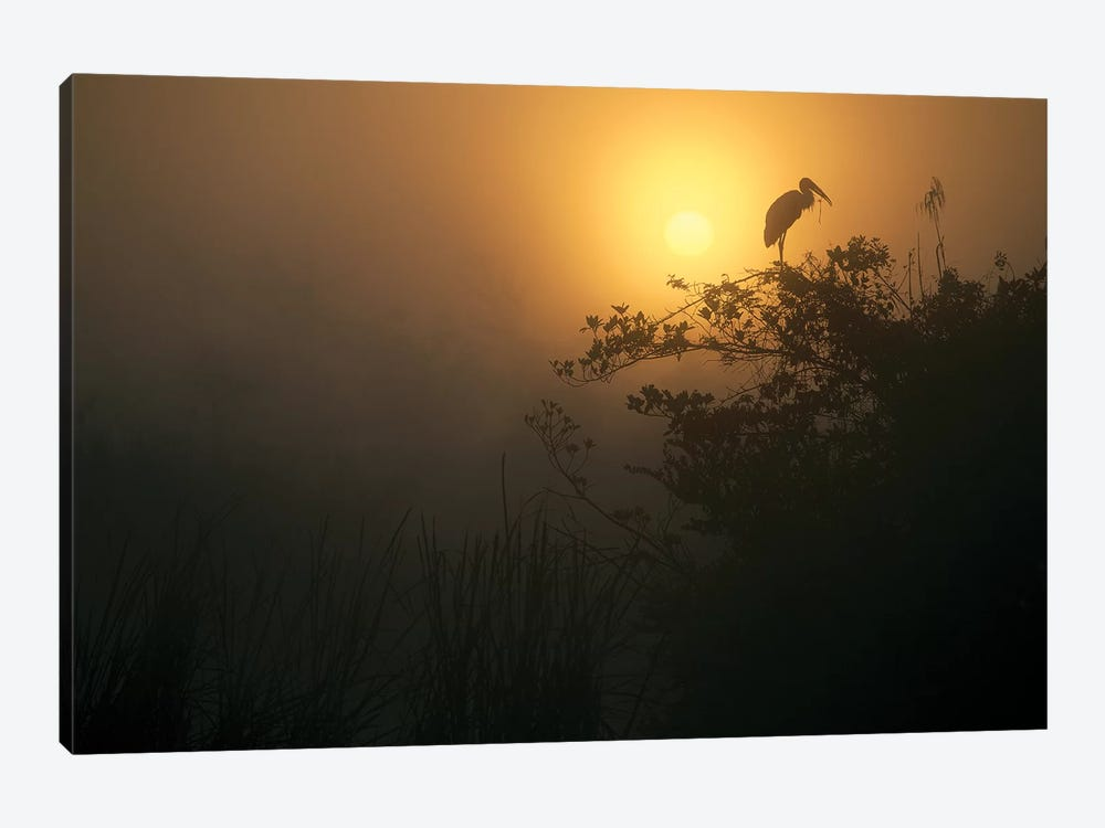 Wood Stork Perched In Tree, Everglades National Park, Florida by Tim Fitzharris 1-piece Canvas Wall Art