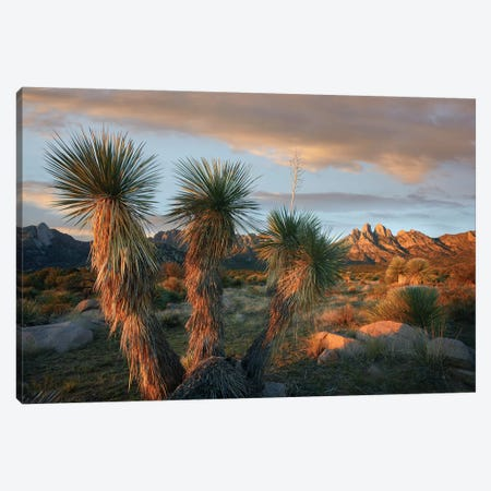 Yucca And Organ Mountains Near Las Cruces, New Mexico Canvas Print #TFI1192} by Tim Fitzharris Art Print
