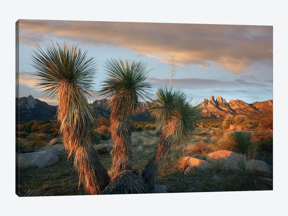 Yucca And Organ Mountains Near Las Cruces, New Mexico by Tim Fitzharris 1-piece Art Print