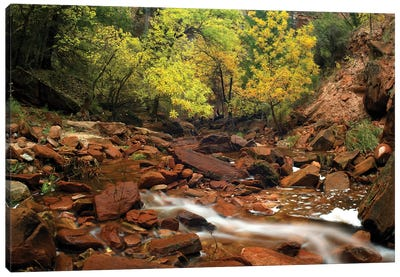 Zion Canyon Near Emerald Pools, Zion National Park, Utah Canvas Art Print