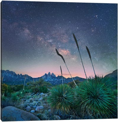 Agave And The Milky Way, Organ Mountains-Desert Peaks National Monument, New Mexico Canvas Art Print