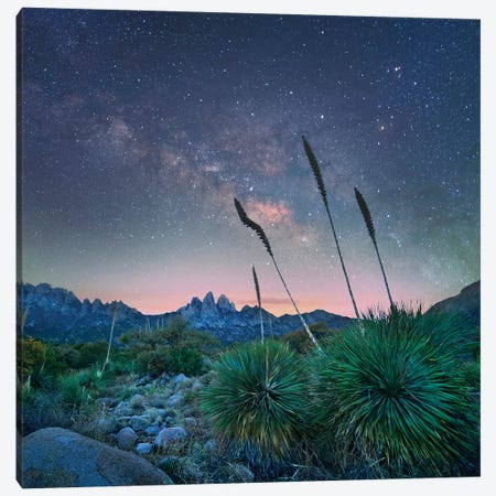 Agave And The Milky Way, Organ Mountains-Desert Peaks National Monument, New Mexico Canvas Print #TFI1194} by Tim Fitzharris Canvas Art