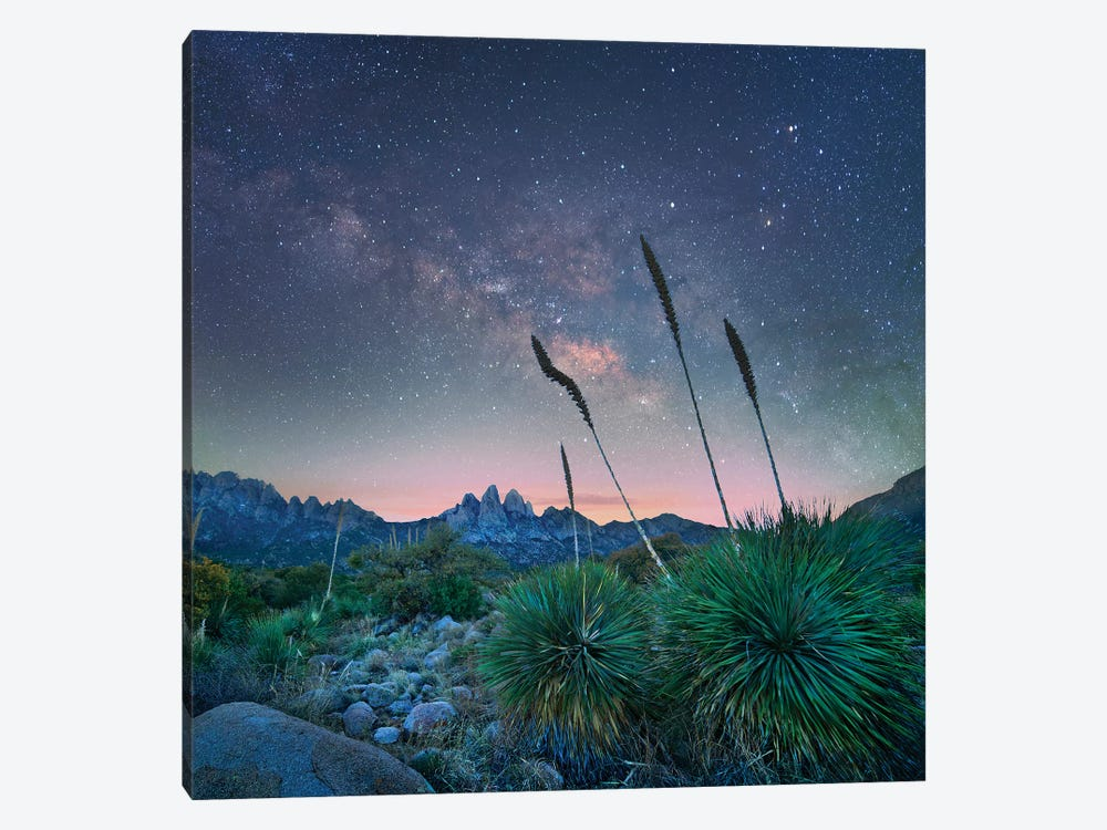 Agave And The Milky Way, Organ Mountains-Desert Peaks National Monument, New Mexico by Tim Fitzharris 1-piece Art Print