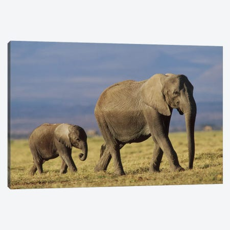 African Elephant Mother Leading Calf, Kenya II Canvas Print #TFI11} by Tim Fitzharris Art Print