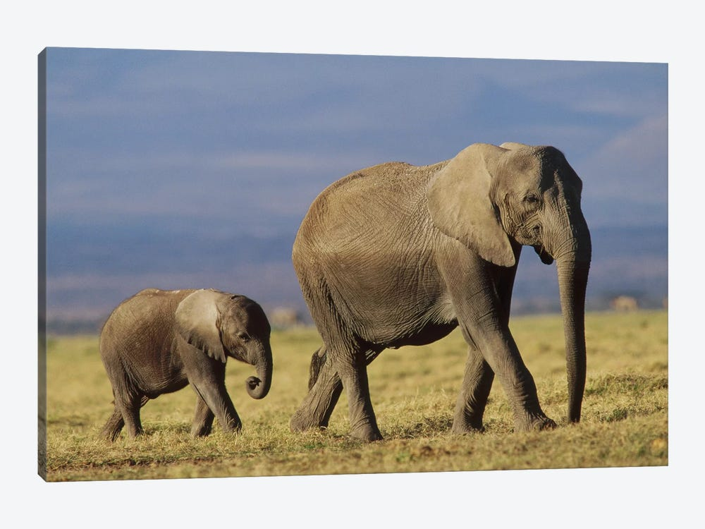 African Elephant Mother Leading Calf, Kenya II by Tim Fitzharris 1-piece Canvas Art