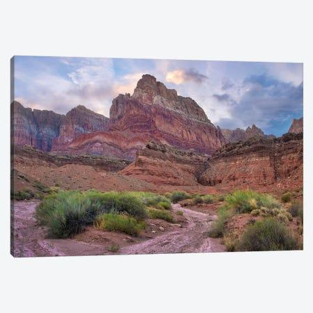 Desert And Cliffs, Vermilion Cliffs National Monument, Arizona Canvas Print #TFI1203} by Tim Fitzharris Art Print