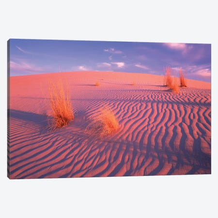 Gypsum Dunes, Guadalupe Mountains National Park, Texas Canvas Print #TFI1209} by Tim Fitzharris Art Print