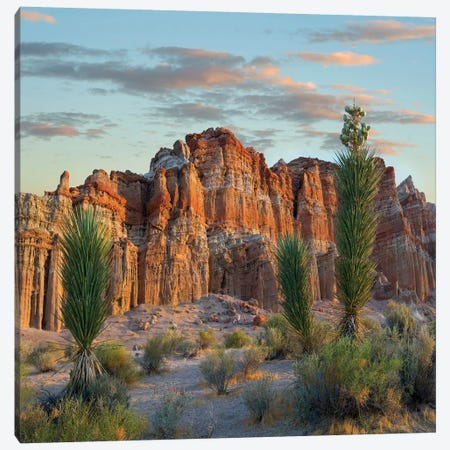 Joshua Tree Saplings And Cliffs, Red Rock Canyon National Conservation Area, Nevada Canvas Print #TFI1210} by Tim Fitzharris Canvas Wall Art