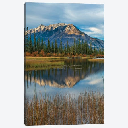 Taiga And Peaks, Moberly Flats, De Smet Range, Rocky Mountains, Jasper National Park, Alberta, Canada Canvas Print #TFI1224} by Tim Fitzharris Canvas Wall Art