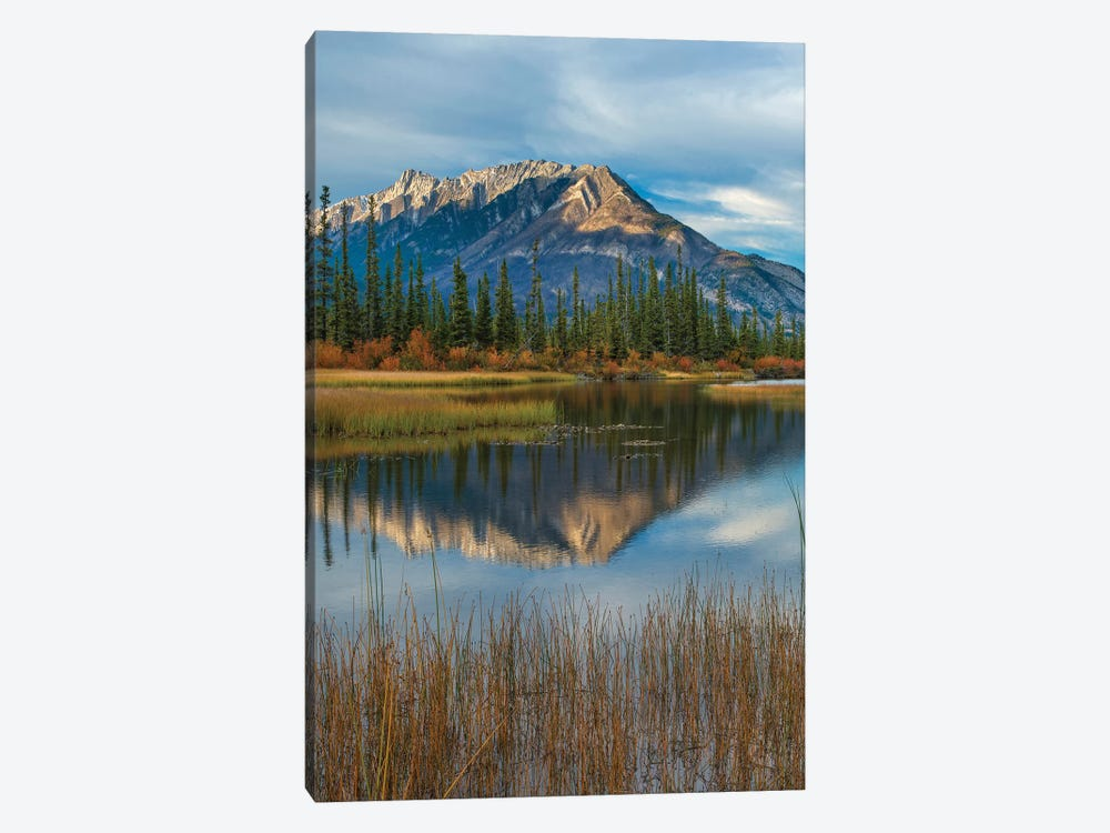 Taiga And Peaks, Moberly Flats, De Smet Range, Rocky Mountains, Jasper National Park, Alberta, Canada by Tim Fitzharris 1-piece Canvas Wall Art
