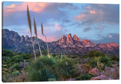 Agave and Organ Mountains, Aguirre Springs, New Mexico Canvas Art Print