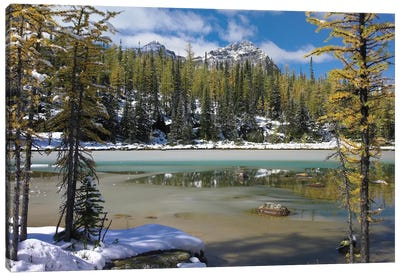 Boreal Forest In Light Snow, Opabin Plateau, Yoho National Park, British Columbia, Canada Canvas Art Print