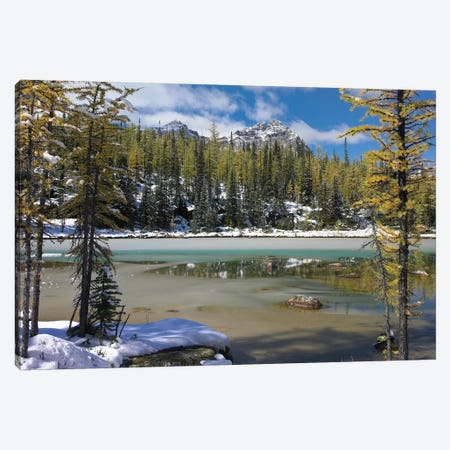 Boreal Forest In Light Snow, Opabin Plateau, Yoho National Park, British Columbia, Canada Canvas Print #TFI122} by Tim Fitzharris Canvas Art Print