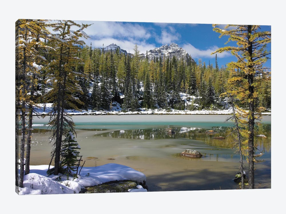 Boreal Forest In Light Snow, Opabin Plateau, Yoho National Park, British Columbia, Canada by Tim Fitzharris 1-piece Canvas Art Print