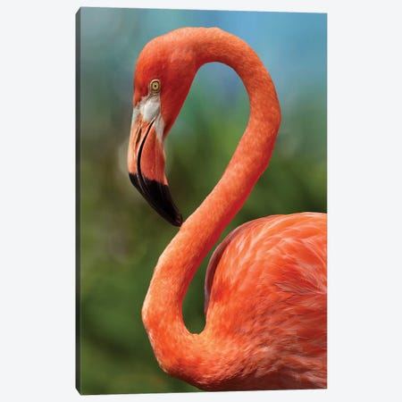 Caribbean Flamingo, showing off its flexible neck, Singapore Canvas Print #TFI1232} by Tim Fitzharris Canvas Art