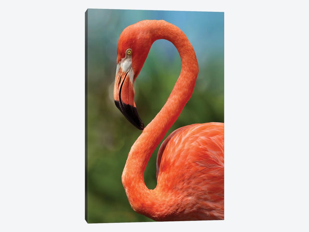 Caribbean Flamingo, showing off its flexible neck, Singapore by Tim Fitzharris 1-piece Art Print