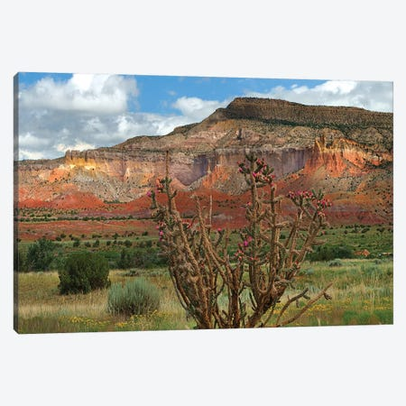 Chola cactus at Kitchen Mesa, Ghost Ranch, New Mexico, USA Canvas Print #TFI1233} by Tim Fitzharris Canvas Artwork
