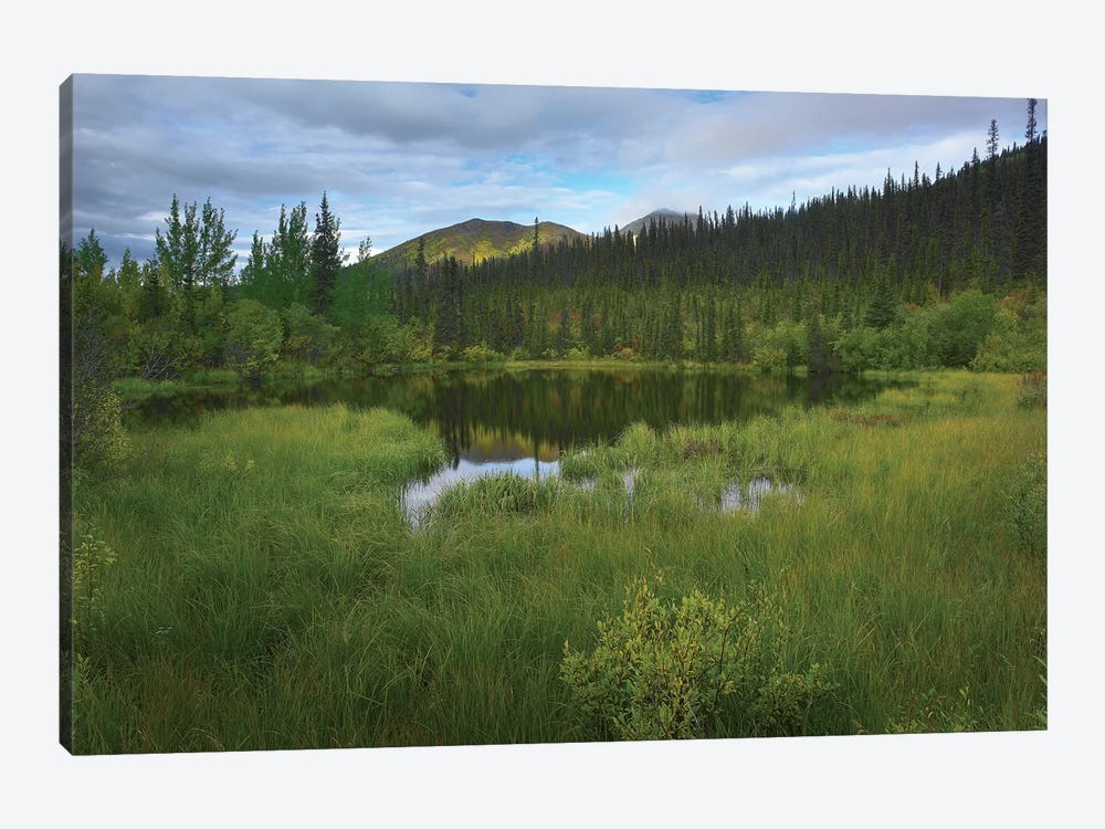 Boreal Forest With Pond And Antimony Mountain In The Background, Ogilvie Mountains, Yukon Territory, Canada by Tim Fitzharris 1-piece Canvas Wall Art
