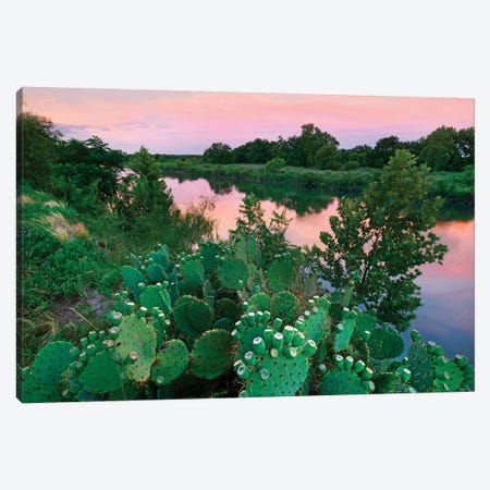 Prickly pear cactus at South Llano River State Park, Texas Canvas Print #TFI1245} by Tim Fitzharris Canvas Artwork