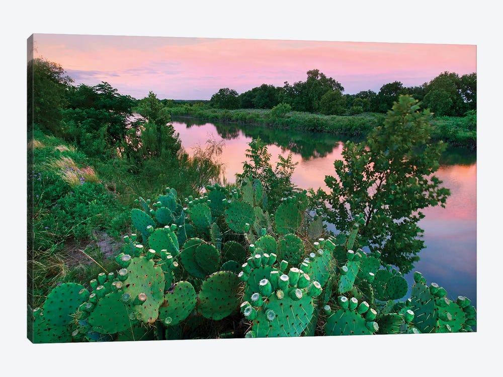 Prickly pear cactus at South Llano River State Park, Texas by Tim Fitzharris 1-piece Canvas Art Print