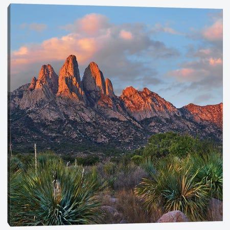 Agave, Organ Mts, Aguirre Spring Nra, New Mexico Canvas Print #TFI1249} by Tim Fitzharris Art Print