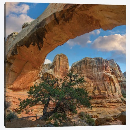 Arch, Hickman Bridge, Capitol Reef National Park, Utah Canvas Print #TFI1255} by Tim Fitzharris Art Print