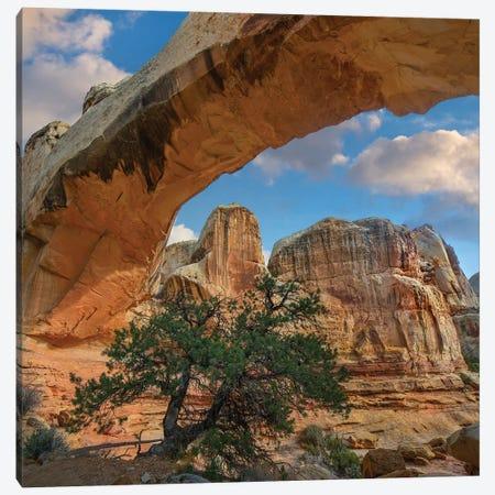 Arch, Hickman Bridge, Capitol Reef National Park, Utah Canvas Print #TFI1255} by Tim Fitzharris Art Print