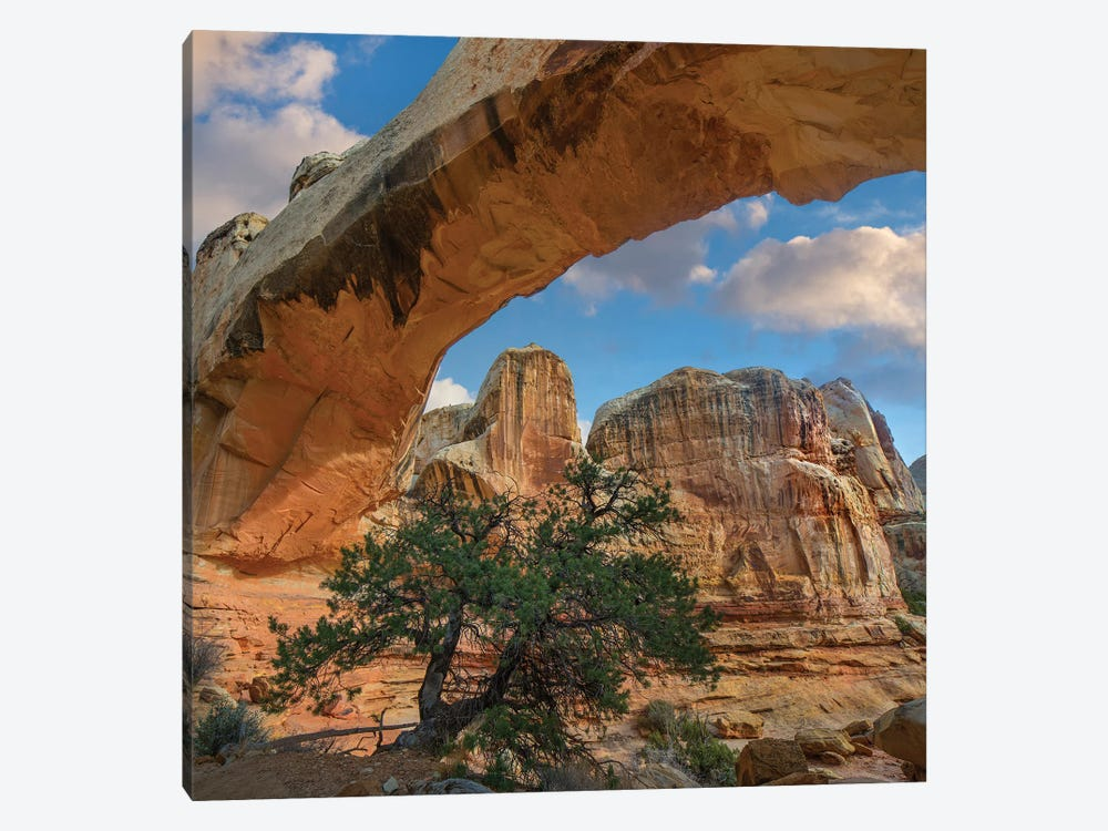 Arch, Hickman Bridge, Capitol Reef National Park, Utah by Tim Fitzharris 1-piece Canvas Wall Art