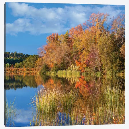 Autumn Along Lake, Tyler State Park, Texas Canvas Print #TFI1257} by Tim Fitzharris Art Print