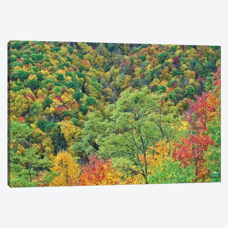 Autumn Forest, Steestachee Bald Overlook, Blue Ridge Parkway, North Carolina 3-Piece Canvas #TFI1258} by Tim Fitzharris Canvas Artwork
