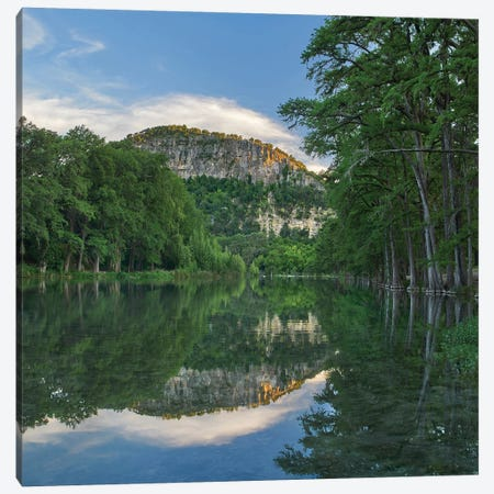 Bald Cypress Trees Along River, Frio River, Old Baldy Mountain, Garner State Park, Texas Canvas Print #TFI1259} by Tim Fitzharris Canvas Artwork
