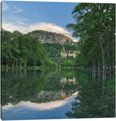 Bald Cypress Trees Along River, Frio River, Old Baldy Mountain, Garner State Park, Texas Canvas Art Print