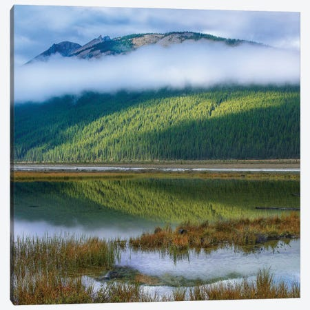 Beauty Creek, Winston Churchill Range, Jasper National Park Canvas Print #TFI1261} by Tim Fitzharris Canvas Print