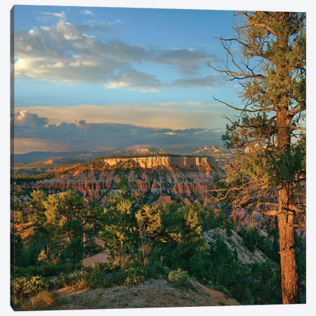 Butte, Bryce Canyon National Park, Utah Canvas Print #TFI1265} by Tim Fitzharris Canvas Art