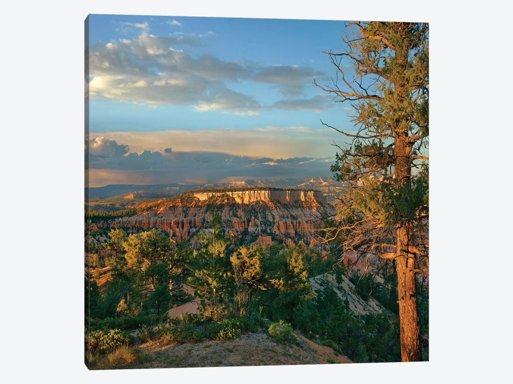 Butte, Bryce Canyon National Park, Utah by Tim Fitzharris 1-piece Canvas Print