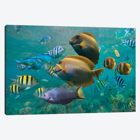 Butterflyfish, Damselfish, Sergeant, Ray-Finned Fish, And Wrasse, Philippines Canvas Print #TFI1269} by Tim Fitzharris Art Print