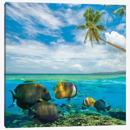 Butterflyfish, Siquijor Island, Philippines Canvas Print #TFI1270} by Tim Fitzharris Canvas Wall Art