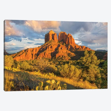 Cathedral Rock, Coconino National Forest, Arizona Canvas Print #TFI1279} by Tim Fitzharris Canvas Wall Art