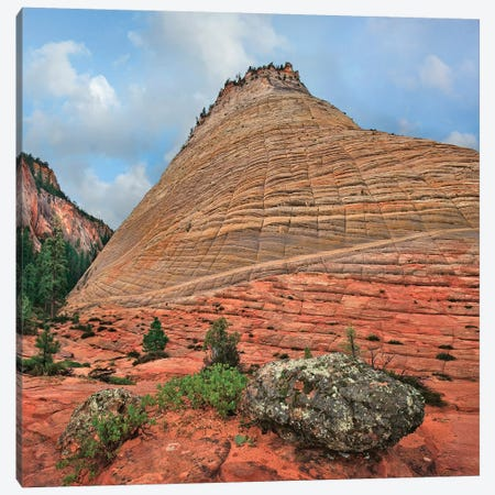 Checkerboard Mesa, Zion National Park, Utah Canvas Print #TFI1280} by Tim Fitzharris Canvas Print
