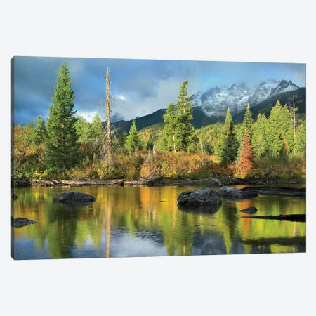 Conifers Along River, Mt Saint John, Grand Teton National Park, Wyoming Canvas Print #TFI1295} by Tim Fitzharris Art Print