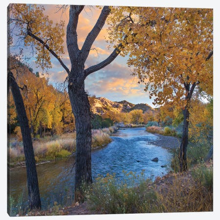 Cottonwoods Along The Rio Grande, Wild Rivers Recreation Area, New Mexico Canvas Print #TFI1299} by Tim Fitzharris Canvas Wall Art