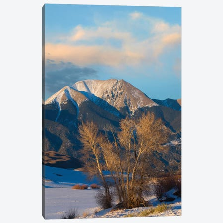 Cottonwoods In Winter, Mount Herard, Great Sand Dunes National Park, Colorado Canvas Print #TFI1300} by Tim Fitzharris Canvas Art