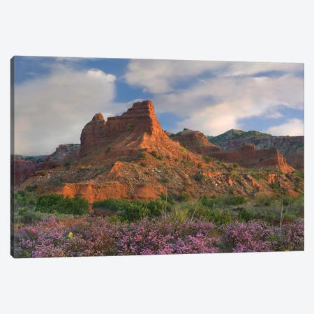 Feather Dalea, Caprock Canyons State Park, Texas 3-Piece Canvas #TFI1319} by Tim Fitzharris Art Print