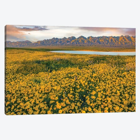 Hillside Daisy Superbloom, Temblor Range, Carrizo Plain Nm, California Canvas Print #TFI1335} by Tim Fitzharris Canvas Artwork