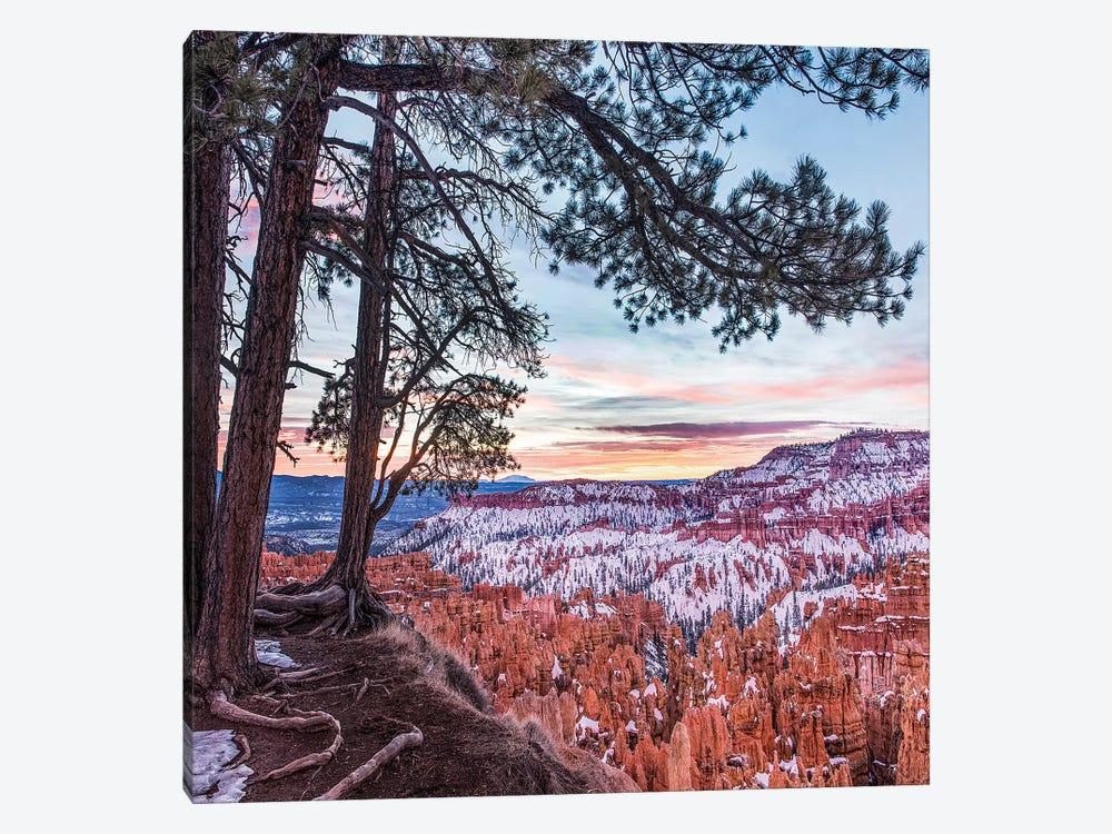 Hoodoos In Winter, Bryce Canyon National Park, Utah by Tim Fitzharris 1-piece Canvas Print