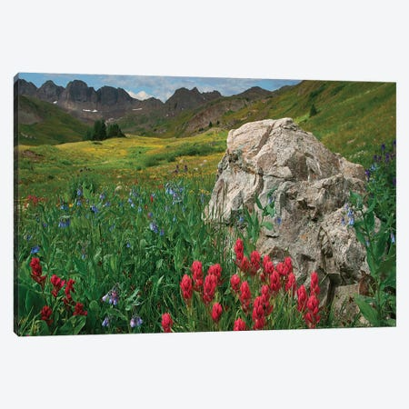 Indian Paintbrush And Mountain Bluebells, American Basin, Colorado Canvas Print #TFI1341} by Tim Fitzharris Canvas Art