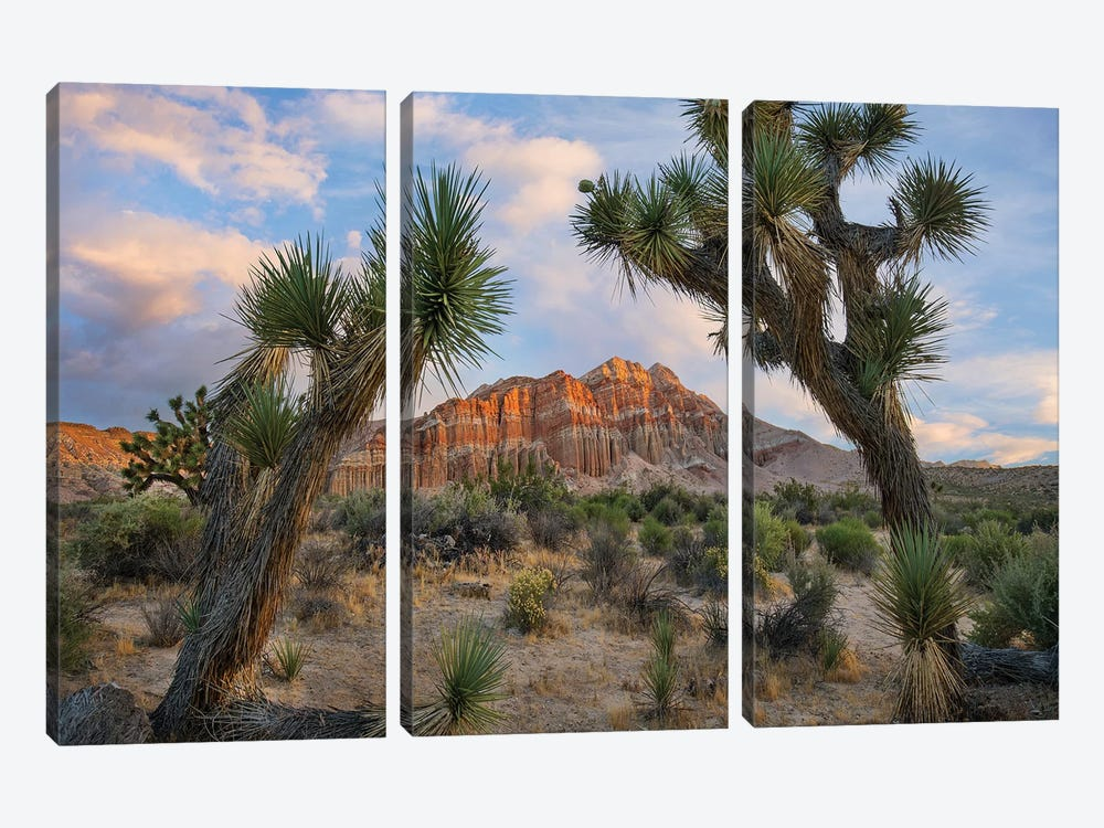 Joshua Tree And Cliffs, Red Rock Canyon State Park, California by Tim Fitzharris 3-piece Canvas Print